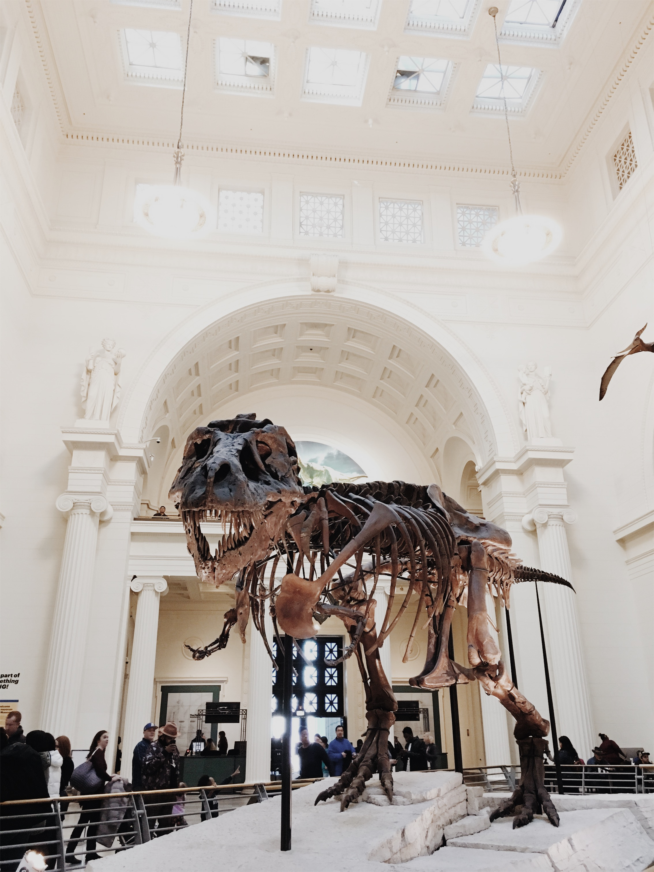 A Weekend In The Worlds Greatest City U Of I Admissions Blog Squirrel Skeleton Diagram Greyhound Meet Sue Trex Shes Largest And Most Complete Ever Found